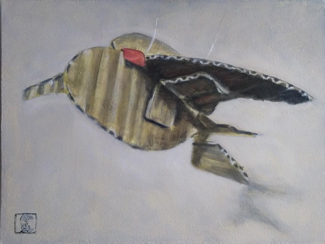 Sanderling number 2